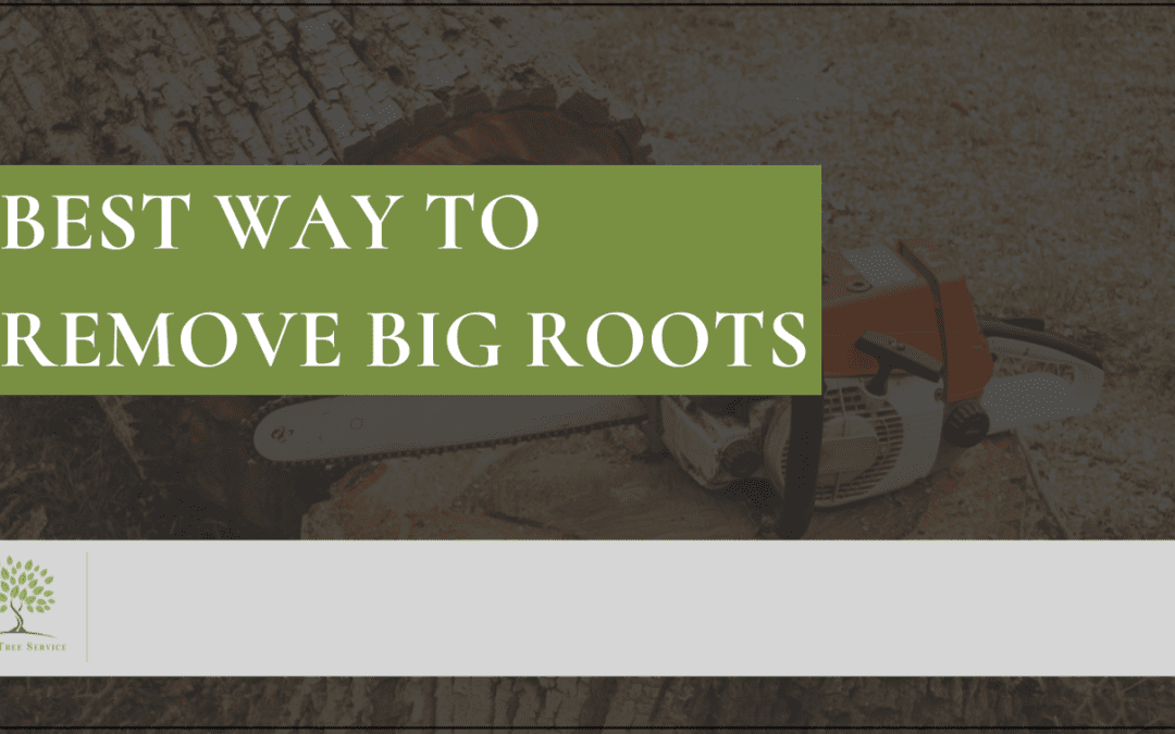 Best Way To Remove Big Roots: 9 Tips For Tree Root Removal